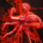 A Curious Octopus