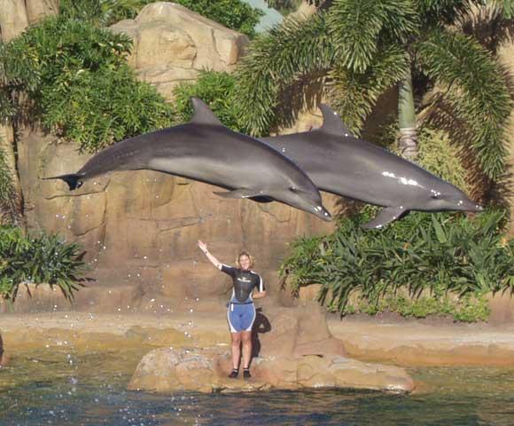 Sea World Dolphins, 2002.