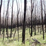 Bushfire aftermath, January 20, 2004.