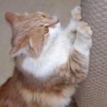 Tigger's Scratching Post