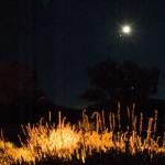 Moon rise, June 2008.