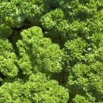 Parsley, a study in greens and textures