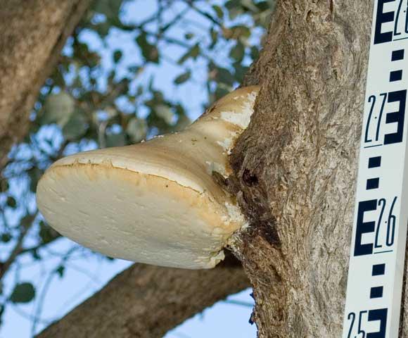 Fantastic Fungus
