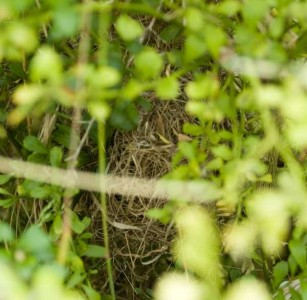 The back of the wrens nest