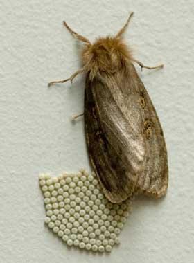 moth eggs
