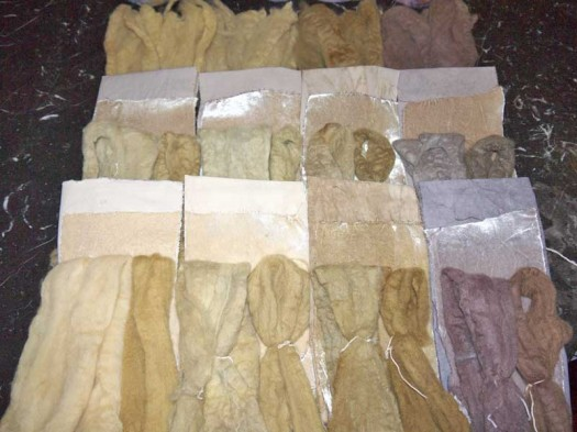 All samples from the first two rounds of dye tests.