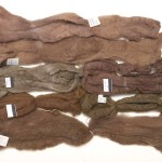 Wool roving, iron mordant.